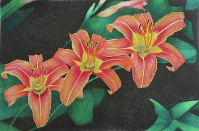 Lilies Drawings - Summer Tiger Lily by Jenny Andreoli