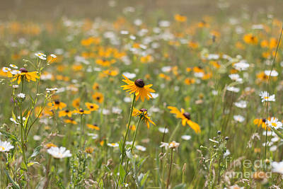 Photograph - Summer Wildflowers by Sheila Skogen