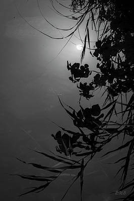 Photograph - Sun And Reflections Bw by David Gordon