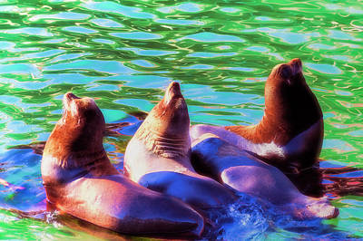 Sun Basking Seals Art Print