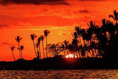 Photograph - Sun Fire Through The Palms by John Bauer