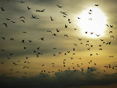 Photograph - Sun Flock by Dave Matchett