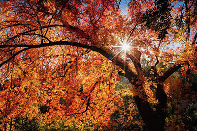 Photograph - Sun Peaking Through The Autumn Colors  by Saija Lehtonen