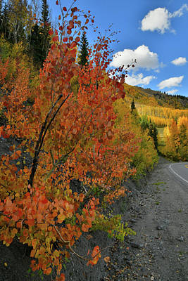 Photograph - Sun Peaks Through On Roadside Fall Colors At Red Mountain Pass by Ray Mathis