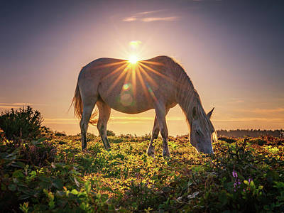 Photograph - Sun Rays On Horseback by Framing Places
