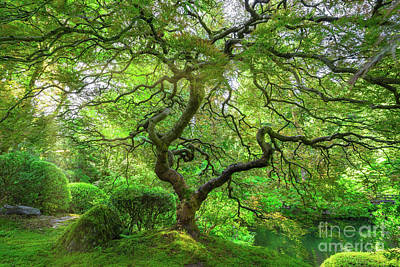 Royalty-Free and Rights-Managed Images - Sun Rays On The Japanese Maple Tree  by Michael Ver Sprill