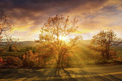 Wall Art - Photograph - Sun Rays Through Trees During Sunset by David Gn