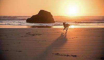 Safari - Sun Runner by Kristopher Schoenleber