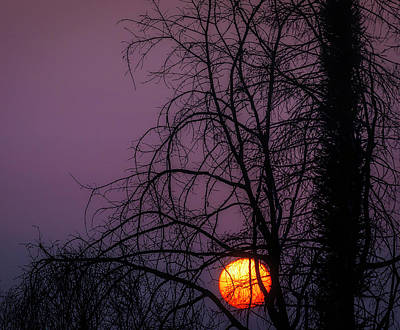 Photograph - Sun Setting Through Trees by Garry Gay