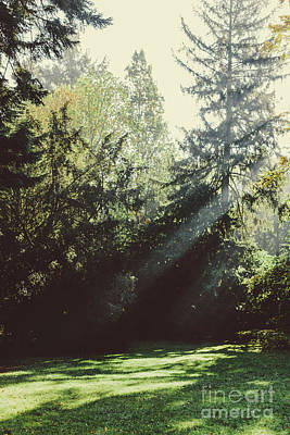 Photograph - Sun Shining Through Trees In The Park. by Michal Bednarek