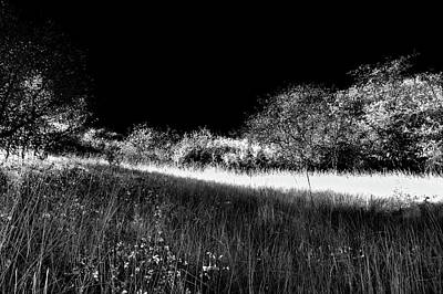 Photograph - Sun Streaks In The Grass by David Patterson