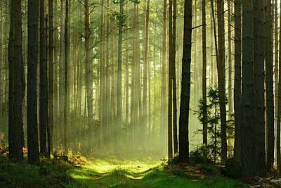 Autumn Photograph - Sunbeams Breaking Through Pine Tree by Avtg