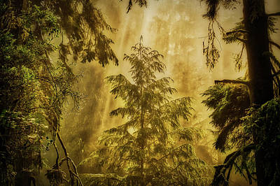 Photograph - Sunbeams In The Foggy Forest #3 by Stuart Litoff
