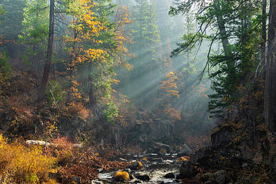 Photograph - Sunbeams On The Mccloud River by PhotoWorks By Don Hoekwater