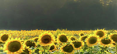Photograph - Sunflower 20 #sunflowers by Andrea Anderegg