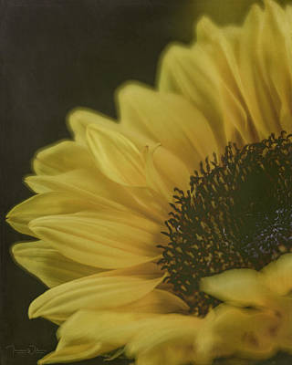 Photograph - Sunflower Beauty By Tl Wilson Photography by Teresa Wilson