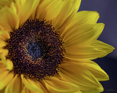Photograph - Sunflower By Tl Wilson Photography  by Teresa Wilson