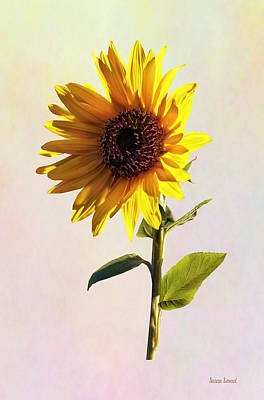 Photograph - Sunflower Enjoying The Sun by Susan Savad