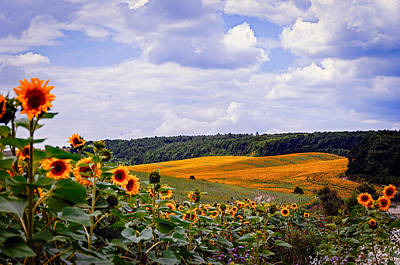 Photograph - Sunflower fields  by Valerie Lazareva