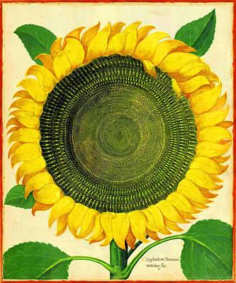 Digital Art - Sunflower by Gary Grayson