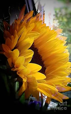 Photograph - Sunflower In My Window 3 by Joan-Violet Stretch