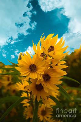 Photograph - Sunflower Portrait by Sherry Little Fawn Schuessler