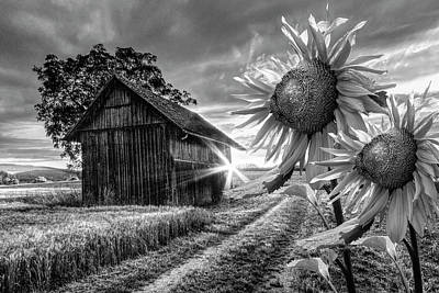 Photograph - Sunflower Watch In Black And White by Debra and Dave Vanderlaan