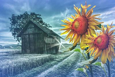 Photograph - Sunflower Watch In Evening Light by Debra and Dave Vanderlaan