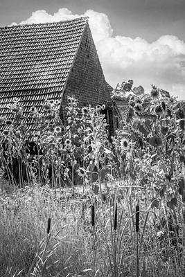Photograph - Sunflowers In The Countryside In Black And  White by Debra and Dave Vanderlaan