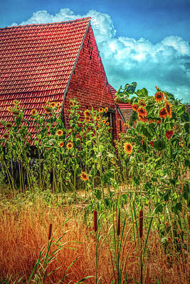 Photograph - Sunflowers In The Countryside In Hdr Detail by Debra and Dave Vanderlaan