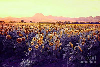 Photograph - Sunflowers by Long Love Photography