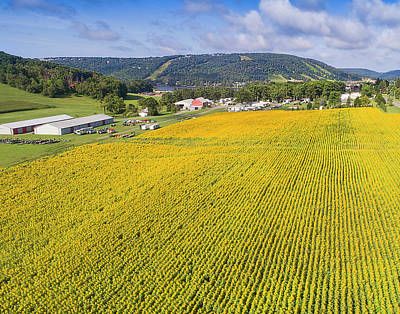 Photograph - Sunflowers by Mid Atlantic Aerial
