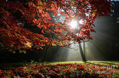Photograph - Sunlight Through Autumn Leaves by Colin Rayner