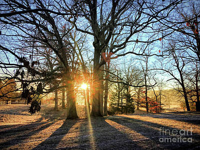 Photograph - Sunlight Through The Trees - Claytor Lake State Park by Kerri Farley