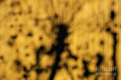 Impressionist Landscapes - Sunlight Through Tree  by Jim Corwin