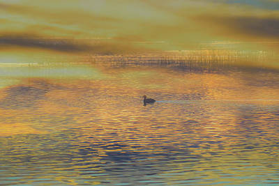Photograph - Sunlight's End by Alan C Wade