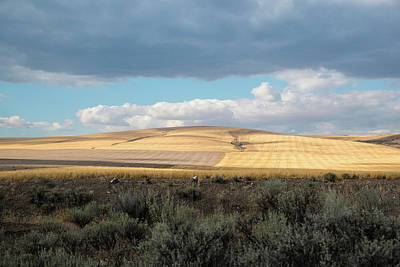 Photograph - Sunlit Wheat And Shadowed Sage by Tom Cochran
