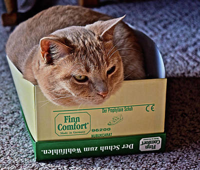 Photograph - Sunny Cat I Fits I Sits by Janis Nussbaum Senungetuk