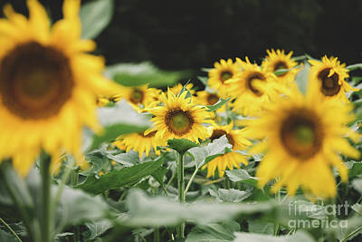 Photograph - Sunny field by Marilyn Nieves
