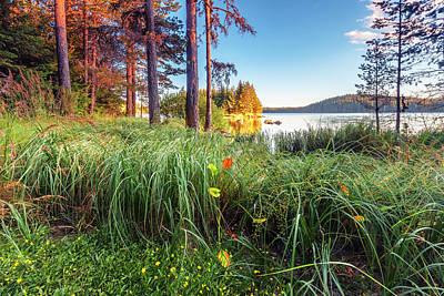 Photograph - Sunny Lake by Evgeni Dinev