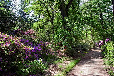 Photograph - Sunny Path Through Rhododendron Woods 2 by Jenny Rainbow