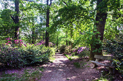 Photograph - Sunny Path Through Rhododendron Woods 4 by Jenny Rainbow