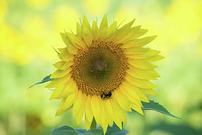 Vintage Buick - Sunny Sunflower by Mary Ann Artz