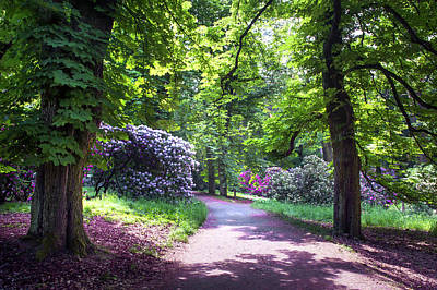 Photograph - Sunny Walkway In Spring Rhododendron Woods by Jenny Rainbow