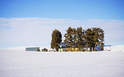 Photograph - Sunny Winter Day  by Tatiana Travelways
