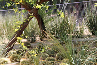 Photograph - Sunnyland Gardens Scene Palo Brea In Foreground by Colleen Cornelius