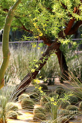Photograph - Sunnyland Gardens Scene Palo Brea In Foreground In Portrait by Colleen Cornelius