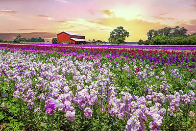 Photograph - Sunrise At The Flower Farm by Lynn Bauer