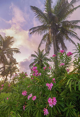 Royalty-Free and Rights-Managed Images - Sunrise in the Palms by Darren White