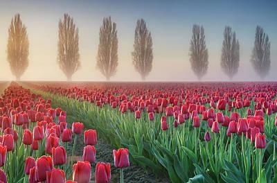 Balance Photograph - Sunrise Over The Skagit Valley Tulip by Alan Majchrowicz